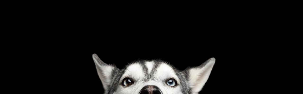 #MyTopdogStatus Banner